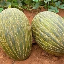 Comprar melones ecologicos online