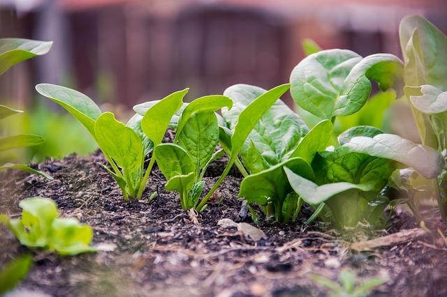 Diferencias entre productos ecológicos, biológicos, orgánicos y sostenibles