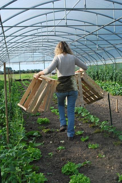 verduras ecológicas de temporada